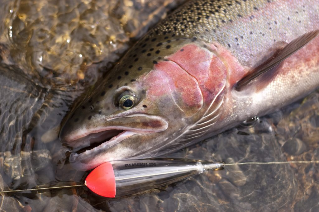 Ten tips for better float fishing salmon steelhead journal for Salmon fishing tackle tips and techniques