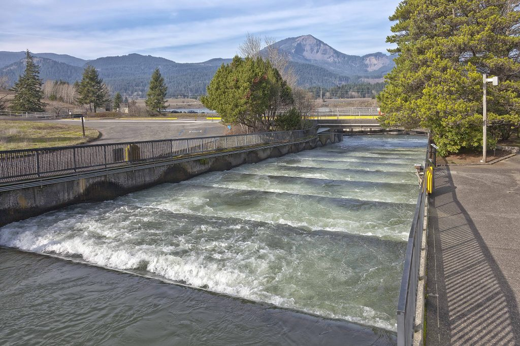 hydro fish ladder bonneville dam