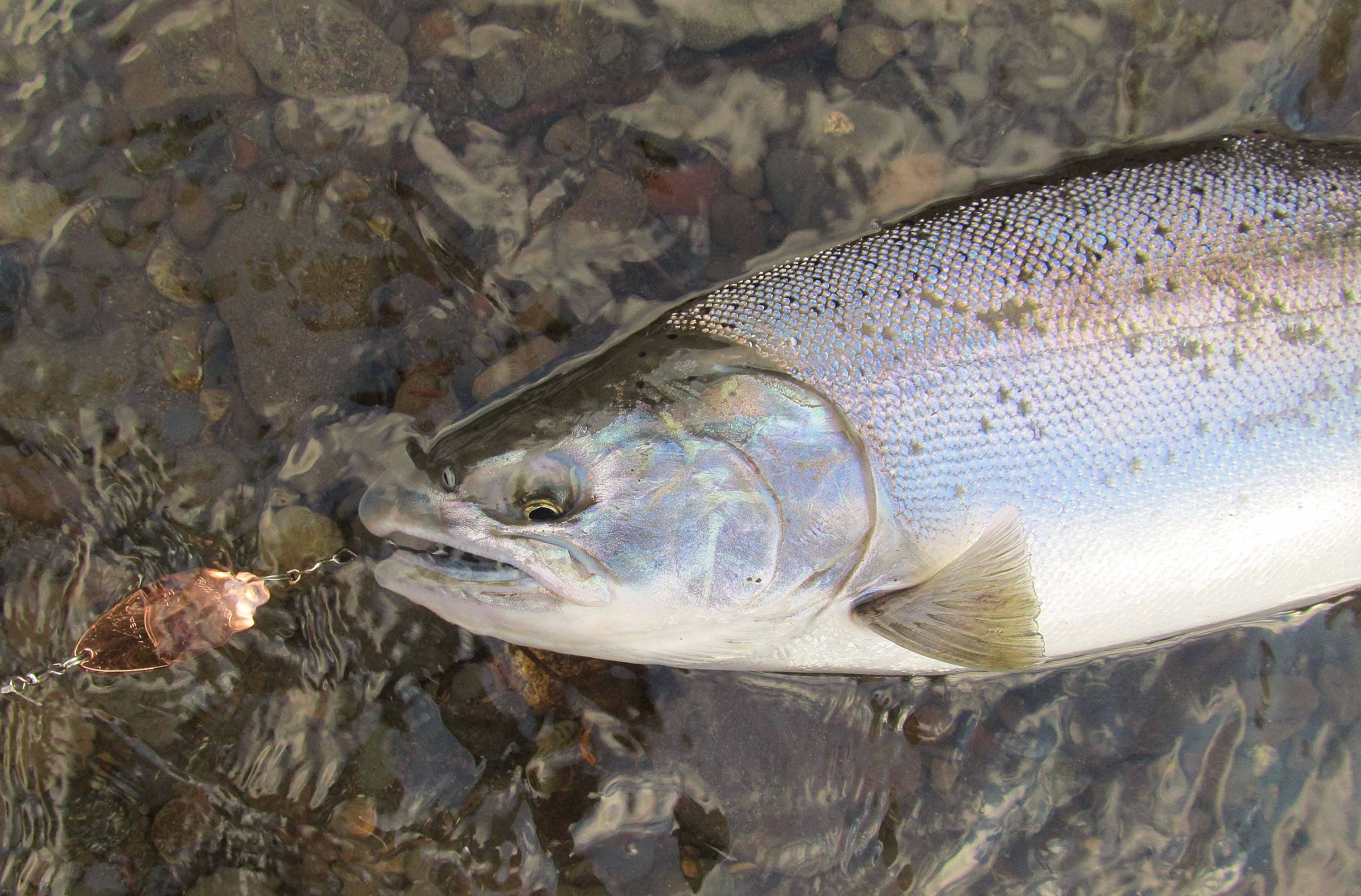 Spoon and Spinner Fishing With Super Lines for Salmon and