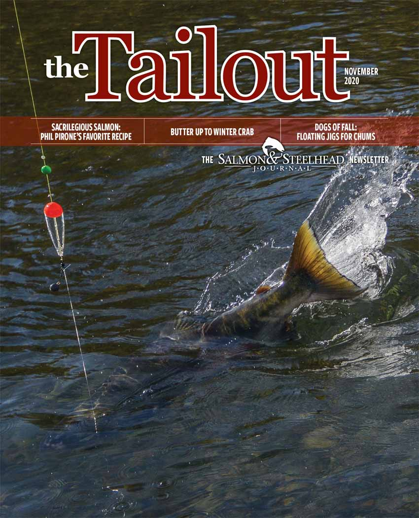 November_20_Tailout