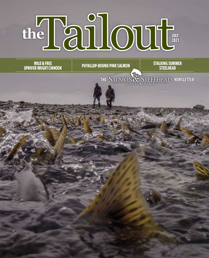 tailout_july2021cover